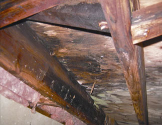 mold and rot in a Columbia crawl space