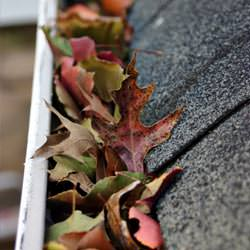 Clogged gutters filled with fall leaves  in Camden
